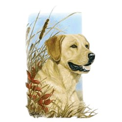 Yellow Lab T-Shirt - Linda Picken