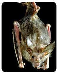 Bat Coasters