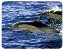 Dolphin Coasters