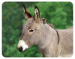 Donkey Coasters