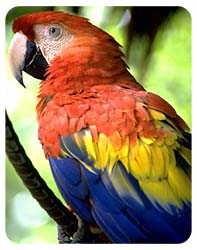 Macaw Coasters
