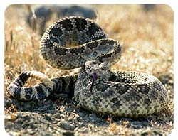 Snake Coasters