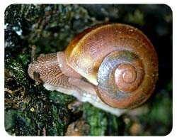 Snail Coasters