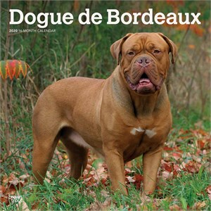 Dogue de Bordeaux Calendar 2015