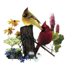 Cardinal T-Shirt - Two Gorgeous Birds