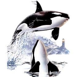 Whale T-Shirt - Orcas