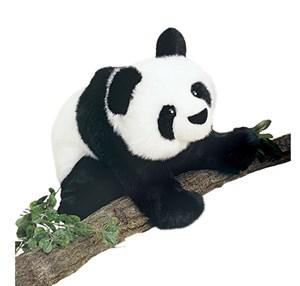 Panda Bear Plush