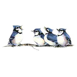 Blue Jay T-Shirt - Entertaining Friends