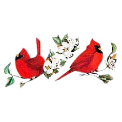 Cardinal T-Shirt - Eye Catching Red
