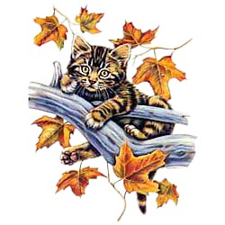Tabby Cat T-Shirt - In a Tree