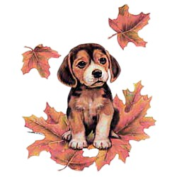 Beagle T-Shirt - Puppy