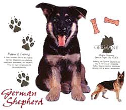 German Shepherd T-Shirt - Jersey