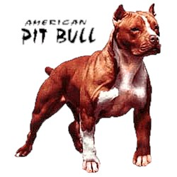 Pit Bull Terrier T-Shirt - Stout and Stong