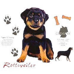 Rottweiler T-Shirt - Facts