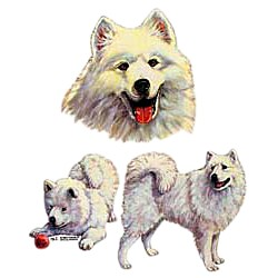 American Eskimo Dog T-Shirt - Collage