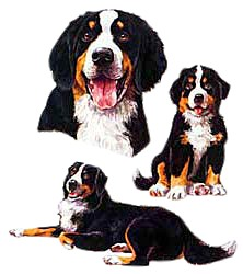 Bernese Mountain Dog T-Shirt - Collage
