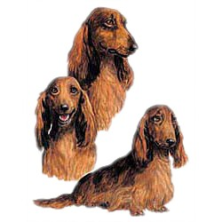 LongHair Dachshund T-Shirt - Collage