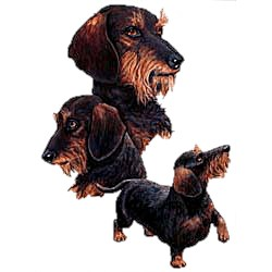 Wirehair Dachshund T-Shirt - Collage
