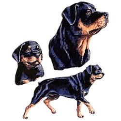 Rottweiler T-Shirt - Collage