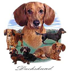 Dachshund T-Shirt - Lawn Dogs