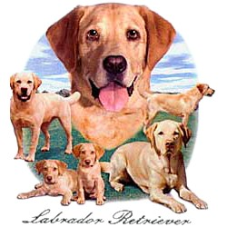 Yellow Lab T-Shirt - Lawn Dogs