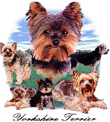 Yorkshire Terrier T-Shirt - Lawn Dogs