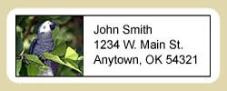 African Gray Parrot Address Labels