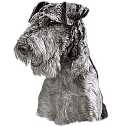 Airedale Terrier T-Shirt - Eye Catching Detail
