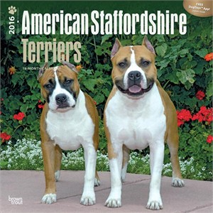 American Staffordshire Terrier Calendar 2015