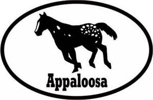 Appaloosa Horse Bumper Sticker Euro