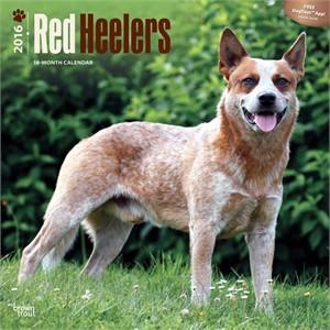 Red Heelers Calendar 2016
