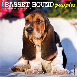 Basset Hound Puppies Calendar 2015