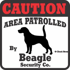 Beagle Bumper Sticker Caution