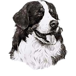 Bernese Mountain Dog T-Shirt - Eye Catching Detail