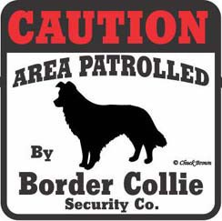 Border Collie Bumper Sticker Caution