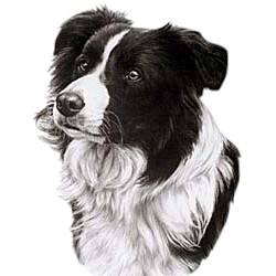 Border Collie T-Shirt - Eye Catching Detail