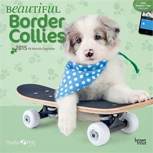 Beautiful Border Collies Calendar 2015