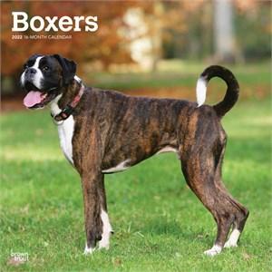 Boxers Calendar 2015 Non Cropped