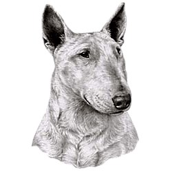 Bull Terrier T-Shirt - Eye Catching Detail