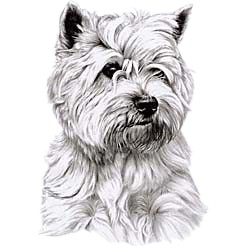 Cairn Terrier T-Shirt - Eye Catching Detail
