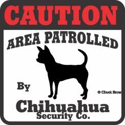 Chihuahua Bumper Sticker Caution