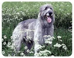Irish Wolfhound Coasters