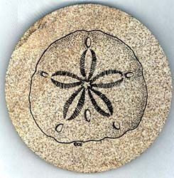 Sand Dollar Drink Coasters