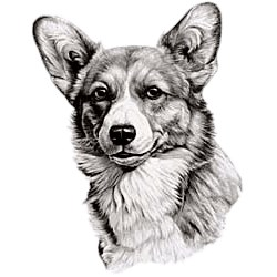 Corgi T-Shirt - Eye Catching Detail
