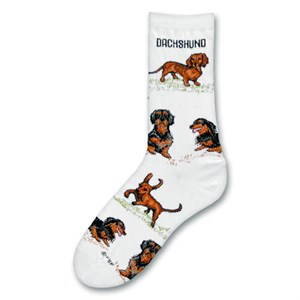 Dachshund Poses Socks