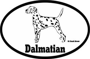 Dalmatian Bumper Sticker Euro