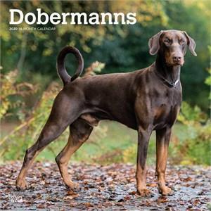 Doberman Pinscher Non-Cropped Calendar 2015