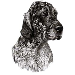 English Setter T-Shirt - Eye Catching Detail