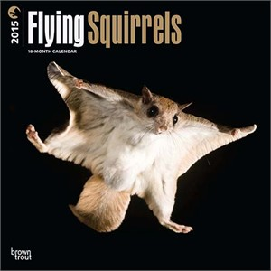 Flying Squirrels Calendar 2015