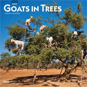 Goats in Trees Calendar 2015
